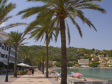 Beach with Palm Trees  Soller  Mallorca  Balearic Islands  Spain  Mediterranean  Europe
