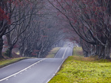 Beech Avenue  Kingston Lacy  Dorset  England  United Kingdom  Europe