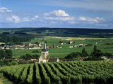 Champagne Vineyards  Ville-Dommange  Near Reims  Champagne  France  Europe