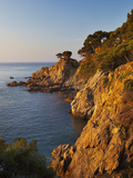 Coastline at Dawn  Calella De Palafrugell  Costa Brava  Catalonia  Spain  Mediterranean  Europe