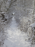 Footpath Near Haddon Hall in Winter  Derbyshire  England  United Kingdom  Europe