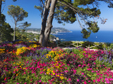 Jardins Botanico De Cap Roig  Calella De Palafrugell  Costa Brava  Catalonia  Spain  Mediterranean 