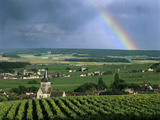 Champagne Vineyards and Rainbow  Ville-Dommange  Near Reims  Champagne  France  Europe