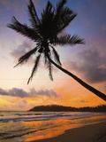 Sunset and Palm Tree and the Western Point of the South Coast Surf Beach at Mirissa  Near Matara  S