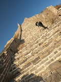 Woman Climbing Steep Steps  Great Wall of China  UNESCO World Heritage Site  Huanghuacheng (Yellow