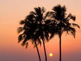 Agonda Beach  Goa  India  Asia