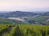 The Vineyards of Sancerre before Sunrise  Cher  Loire Valley  Centre  France  Europe