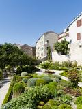 Medieval Mediterranean Garden of St Lawrence Monastery  Sibenik  Dalmatia Region  Croatia  Europe