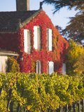 Unesco-Listed Vineyards  Wine Town  St-Emilion  Gironde Department  Aquitaine Region  France