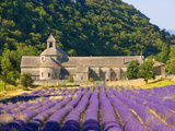 Cistercian Monastery of Senanque Beside Lavender Field  Provence Region  Gordes  France