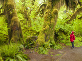 Woman Hiking  Hall of Moss in the Hoh Rainforest  Olympic National Park  Washington  Usa