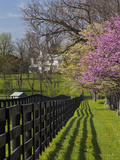 Fence and Dogwood and Redbud Trees in Early Spring  Lexington  Kentucky  Usa