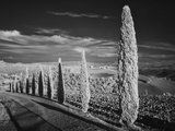 Infra Red Black and White View of Drive Lined with Cypress Trees  San Quirico D'Orcia  Tuscany  Ita