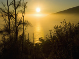 Sweet Fennel  Foeniculum Vulgare  and Sunset over Big Sur Coastline  California  Usa