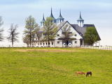 Thoroughbred Horses Grazing  Manchester Horse Farm  Lexington  Kentucky  Usa