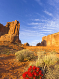Desert Paintbrush Livens Up the Landscape Near Courthouse Towers in Arches National Park  Utah  Usa