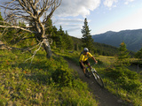 Steve Bjorklund Rides the Singletrack of the Bangtail Ridge Trail Near Bozeman  Montana  Usa Mr