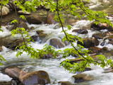 Middle Prong of the Little River  Great Smoky Mountains National Park  Tennessee  Usa