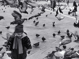 Pigeons in Piazza San Marco  Venice  Veneto  Italy