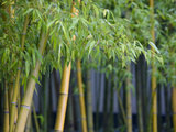 Bamboo in Traditional Chinese Garden  Suzhou Museum  Suzhou  Jiangsu  China