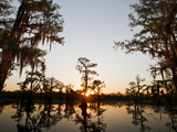 Caddo Lake at Sunrise  Marion Co  Texas  Usa