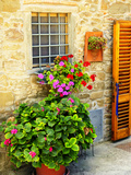 Late Summer in the Tuscan Village of Volpaia  Tuscany  Italy