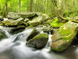 Roaring Fork River  Great Smoky Mountains National Park  Tennessee  Usa