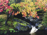 Fall Color in Seattle's Japanese Garden in the Arboretum  Seattle  Washington  Usa