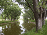 Shaded River in the Pampa Region  Argentina