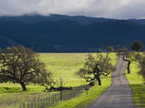 Trees and Country Road  Santa Barbara Wine Country  Santa Ynez  Southern California  Usa