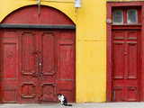 Cat and Colorful Doorways  Valparaiso  Chile