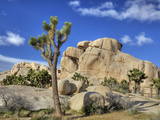 Granite Rock Formation and Joshua Tree  Joshua Tree National Park  California  Usa