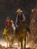 Traveling Via Mule  Grand Canyon National Park  Arizona  Usa