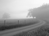 Sunrise on Foggy Frosty Morning  Cades Cove  Great Smoky Mountains National Park  Tennessee  Usa