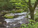 Mountain Stream  Great Smoky Mountains National Park  North Carolina  Usa