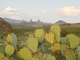 Mule Ears and Prickly Pear Cactus  Chisos Mountains  Big Bend National Park  Brewster Co  Texas  U