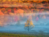 Mist and Forest in Autumn Color  Davis  West Virginia  Usa