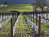 Santa Barbara Wine Country  Santa Ynez  Southern California  California  Usa