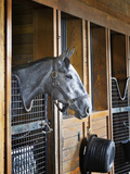 Thoroughbred Horse in Stall  Donamire Horse Farm  Lexington  Kentucky  Usa