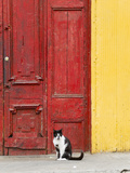 Cat and Colorful Doorway  Valparaiso  Chile
