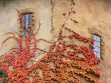 Detail of Round Tower and Virginia Creeper  La Caille at Quail Run  Salt Lake Valley  Utah  Usa