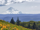 Mt Hood from Mccall Point  Tom Mccall Nature Preserve  Columbia Gorge  Oregon  Usa