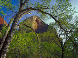 Cottonwoods and Red Arch Mountain in Early Spring  Zion National Park  Utah  Usa