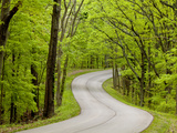 Curvy Roadway under Spring Green Canopy at Brown County State Park in Indiana  Usa
