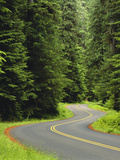 Road Trough Old Growth Forest  Olympic National Park  Washington  Usa