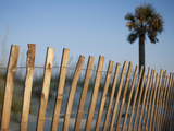 Palmetto Palm and Cyclone Fence Along Sand Dunes at Sunset  Tybee Island  Georgia  Usa