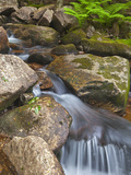 Jordan Stream in Acadia National Park  Maine  Usa