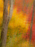 Abstract of Autumn Forest Scene  New York  Usa
