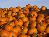 Wagon Laod of Ripe Pumpkins in the Flathead Valley Near Kalispell  Montana  Usa
