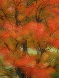 Multi-Exposure Views of Sugar Maple Trees in Autumn